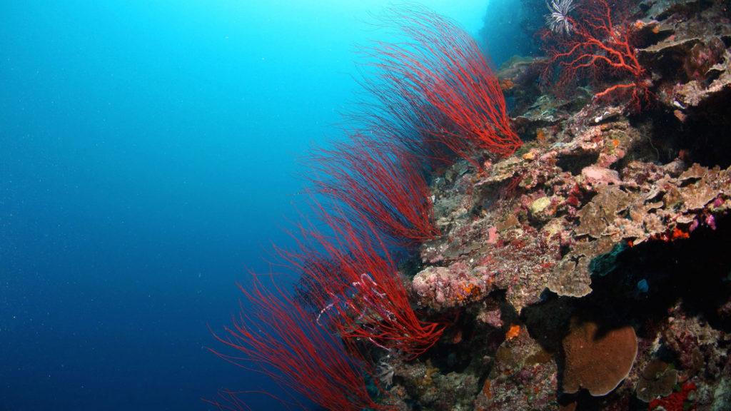 Kula Coral Display